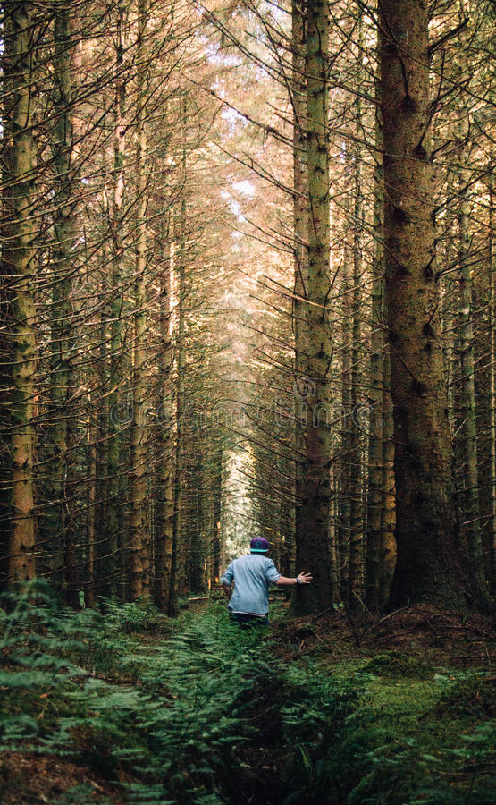 Man In A Forest Free Public Domain Cc0 Image