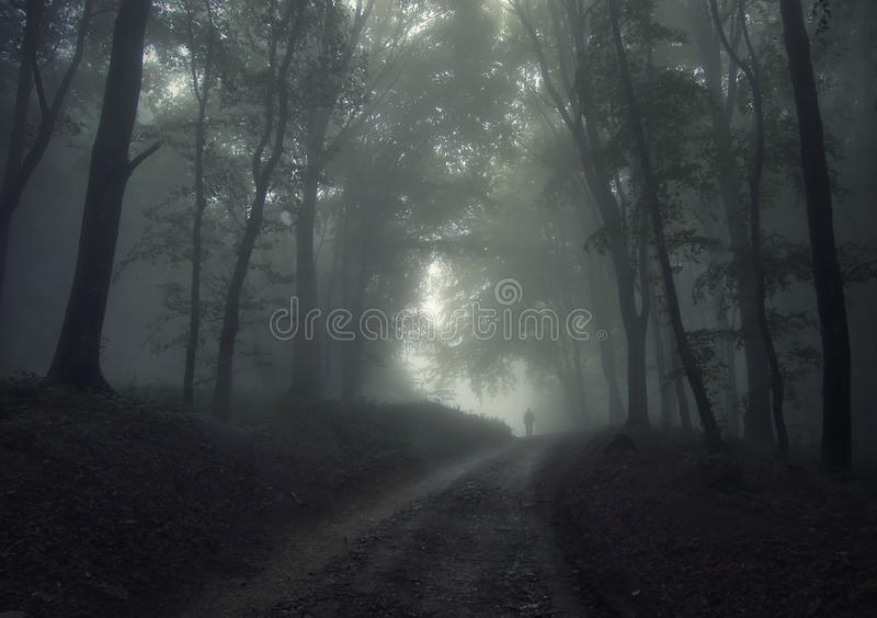 Man in a forest with fog royalty free stock image