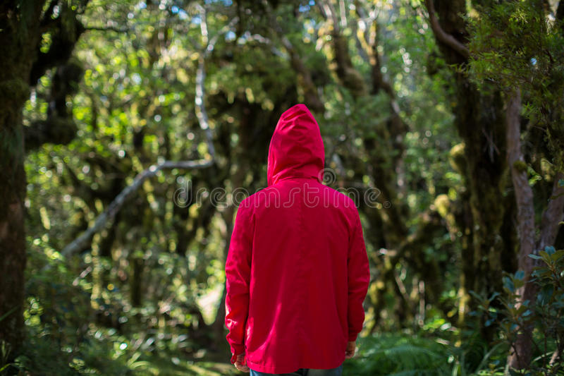Man in forest, New Zealand stock photography