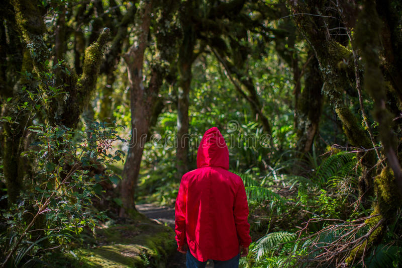 Man in forest, New Zealand stock photos