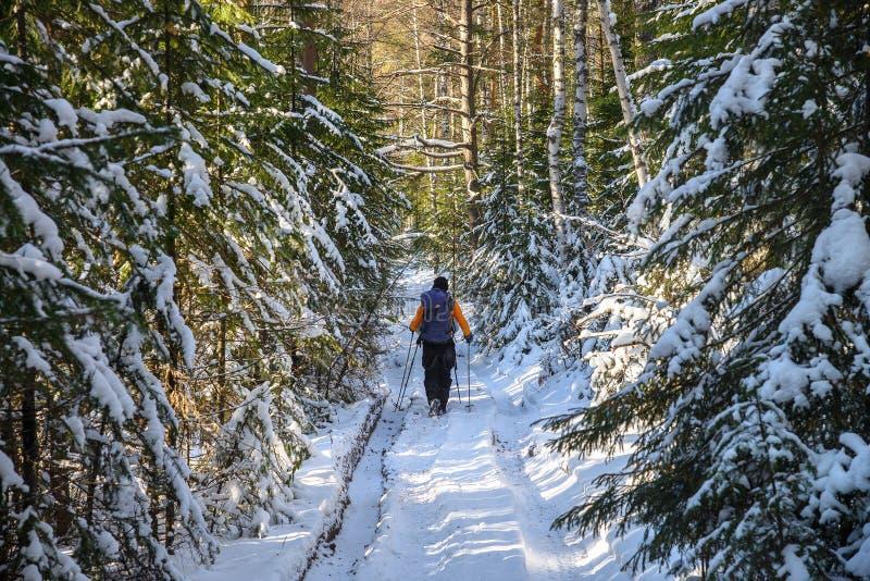 Man fotvandraren med ryggsäckresande i snöig skoglandskap för vinter Aktiv semestrar det utomhus- begreppet royaltyfri fotografi