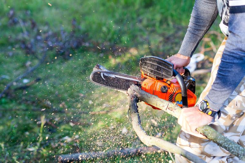 Man with gasoline powered chainsaw cutting fire wood from tree i stock images