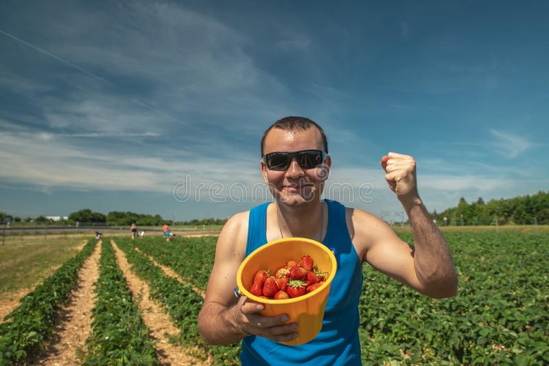 Man in glasses rejoices harvest strawberries on a field in Germany.  royalty free stock images