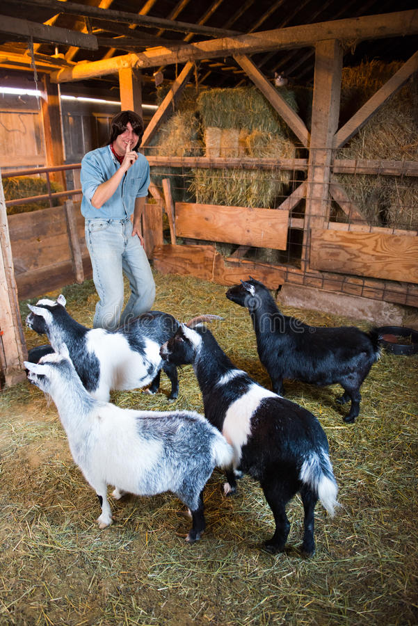 Download Man With Goats About To Play A Joke Stock Image - Image of long, goat: 28020681