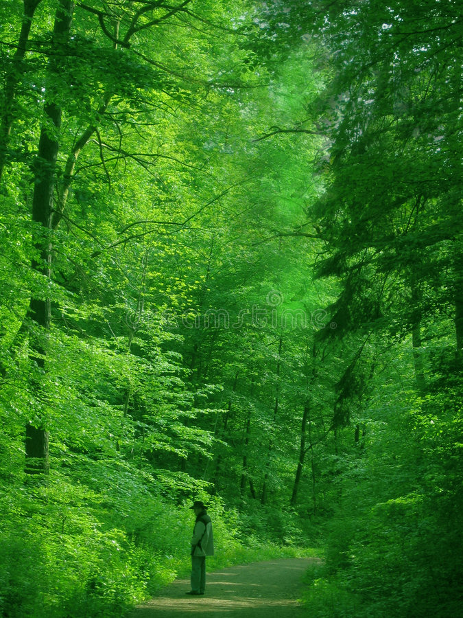 Man in a green forest. A man meditates alone in the deep green forest. A pause to appreciate nature´s vastness and beauty. Fit for wellness, regeneration