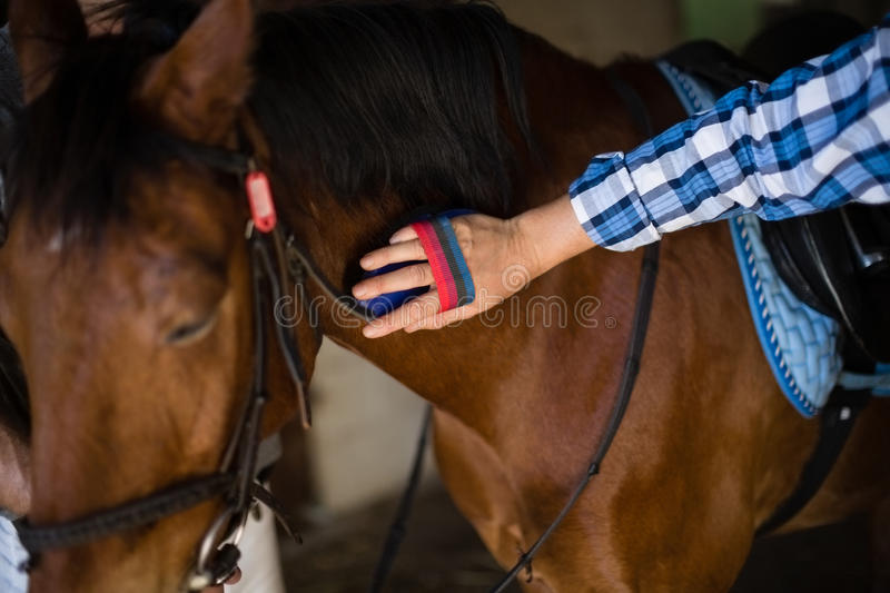 Man grooming the horse in the stable. Close-up of man grooming the horse in the stable royalty free stock photography