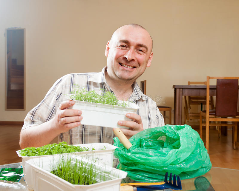 Man growing parsley and dill in pots royalty free stock photography