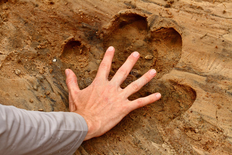 Man Hand binnen van de Druk van de Nijlpaardvoet royalty-vrije stock foto