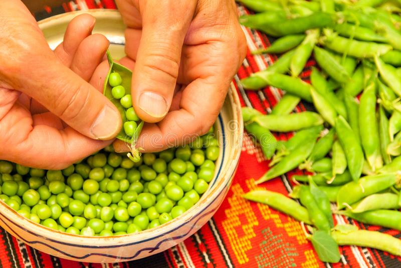 Man hand breaking away peas sheath over clay bowl with fresh green peas beans and peas sheath aside on traditional cloth. Man hand breaking away peas sheath over royalty free stock photo