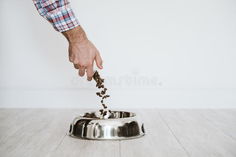 man hand filling a bowl of dog food at home royalty free stock photography