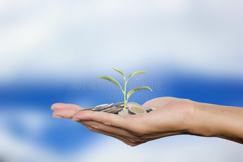 Man hand gesture open up holding stack coins on palm with sapling on clouds sky background. Conceptual saving, investment, growing stock photography