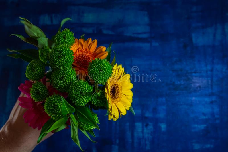 Man hand hold nice pink, yellow and orange gerbera daisy flower with green leaves on blue background stock images