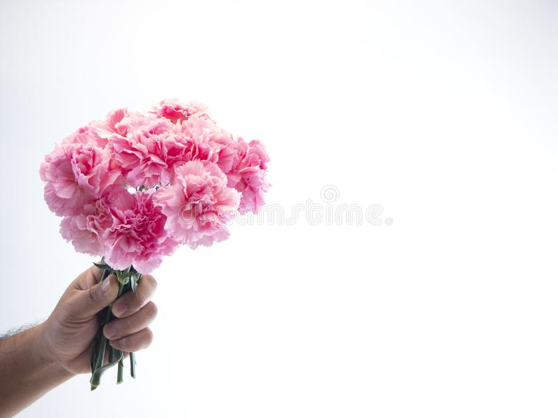 Man hand hold pink carnation on white background. Flat lay, minimal festive spring flower background stock photography
