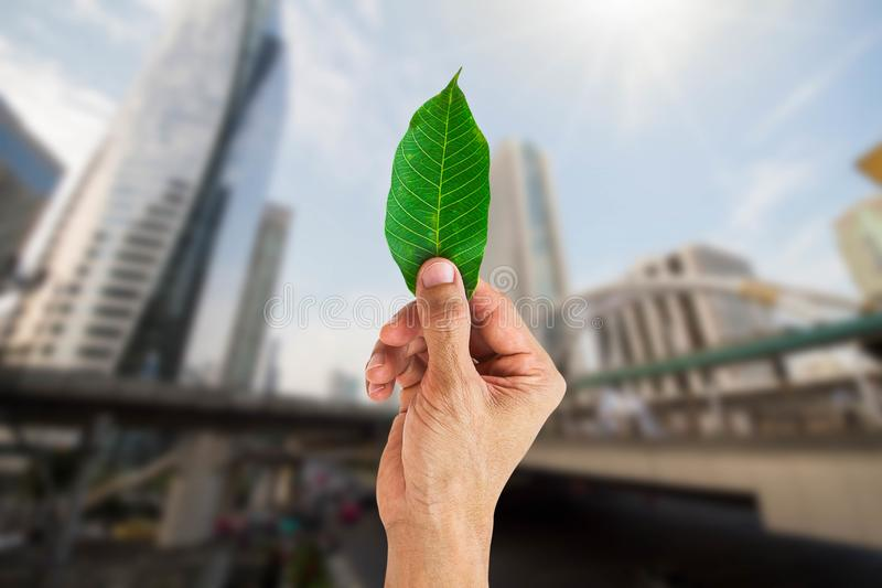 Man hand holding green leaf on blurred city background stock photo