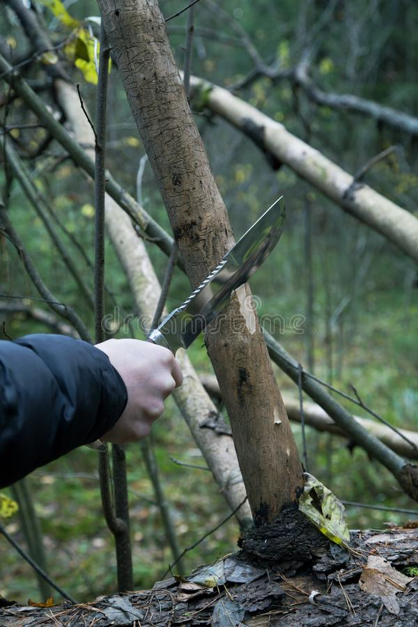 Man hand with a hunting knife cuts. A tree branch stock photo