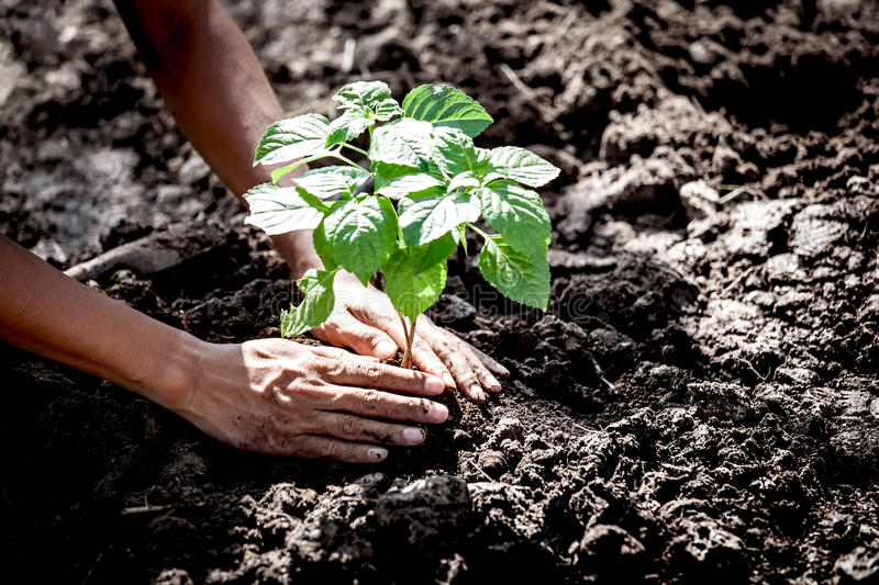 Man hand planting young tree on black soil. As save world concept royalty free stock images