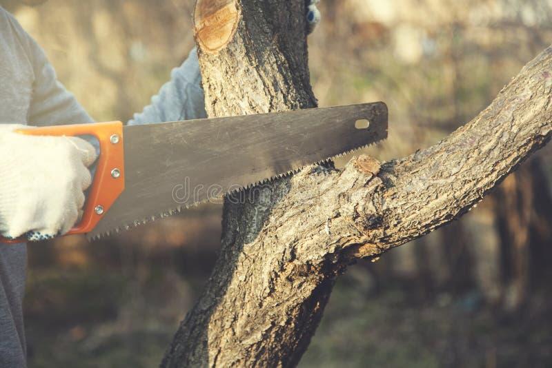 Man hand saws with tree stock photo
