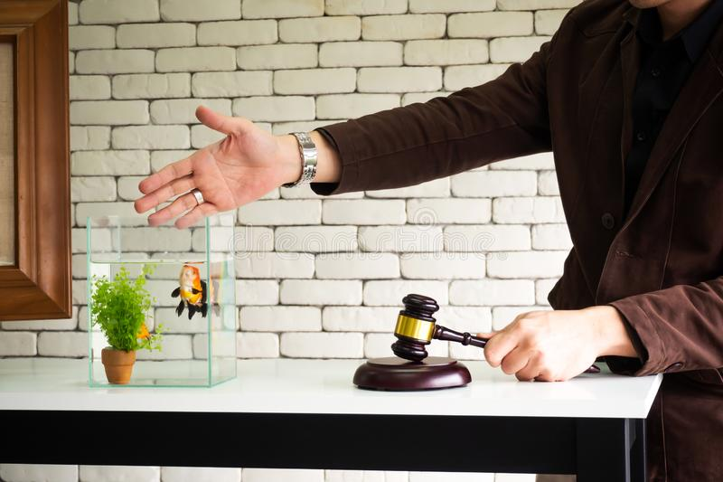 Man hand use wooden gavel knock for sale fish bidding. Business stock photography