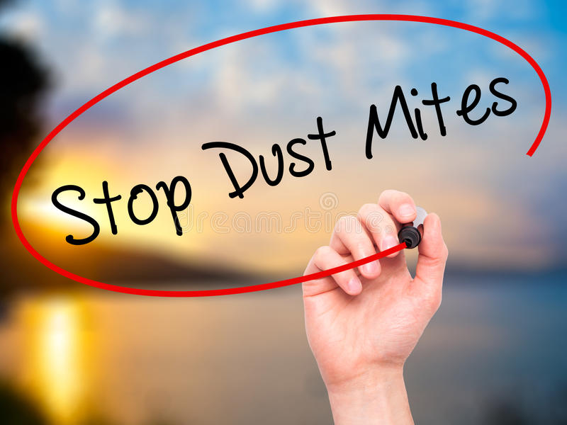 Man Hand writing Stop Dust Mites with black marker on visual sc. Reen. Isolated on background. Business, technology, internet concept. Stock Photo royalty free stock photography