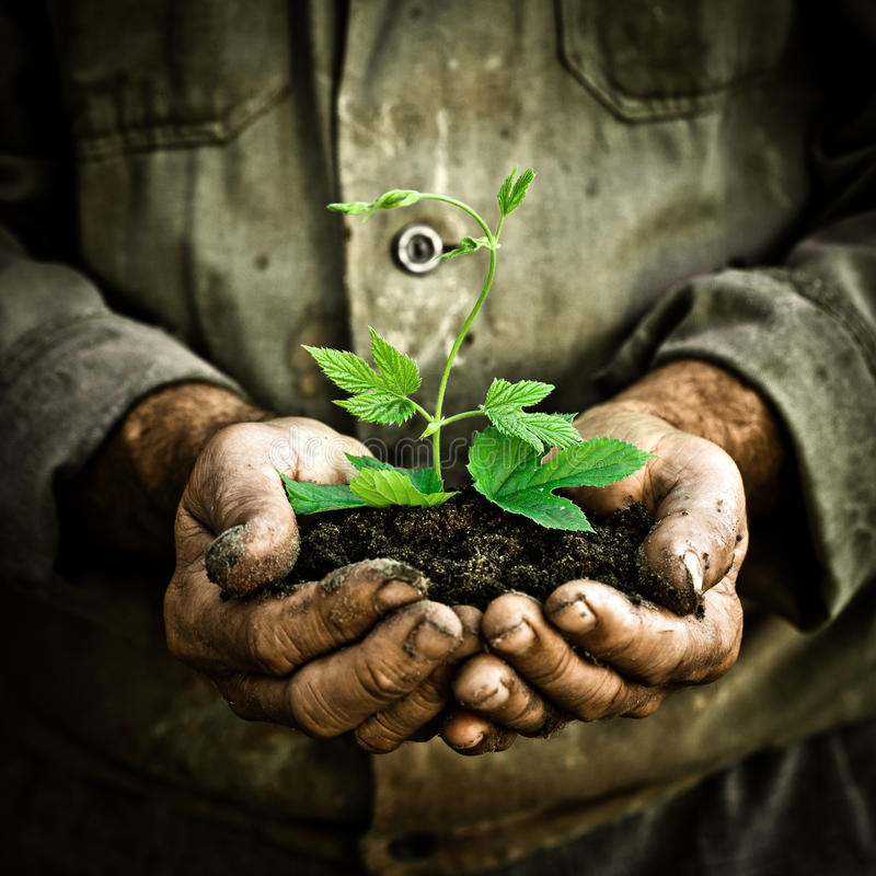 Free Man Hands Holding A Green Young Plant Royalty Free Stock Images - 22685129