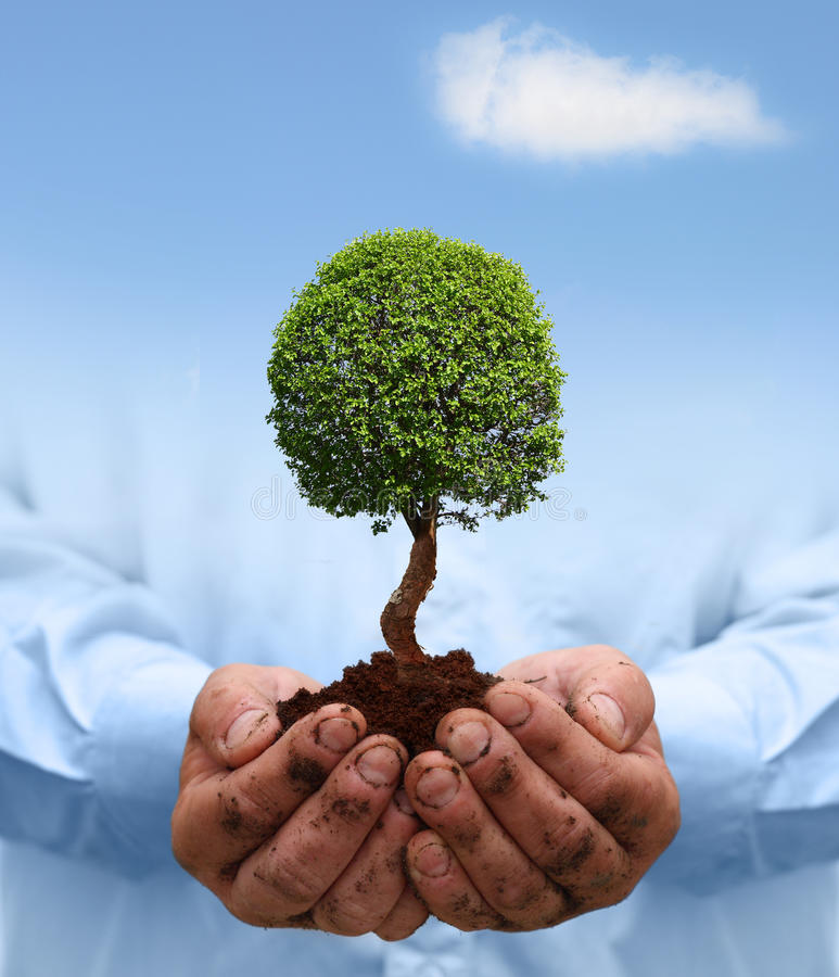 Download Man Hands Holding A Green Tree. Stock Photo - Image: 28983250