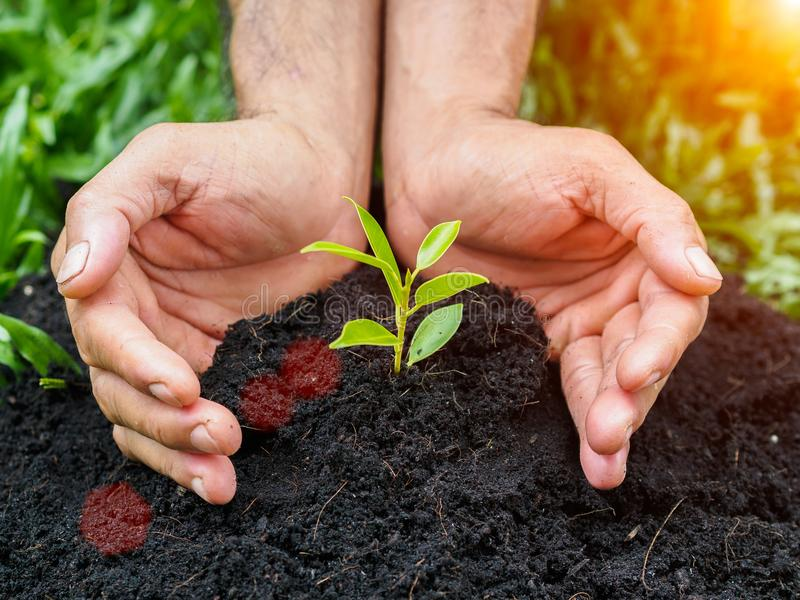 Man hands planting the tree into the soil. planting concept. Environment concept royalty free stock image