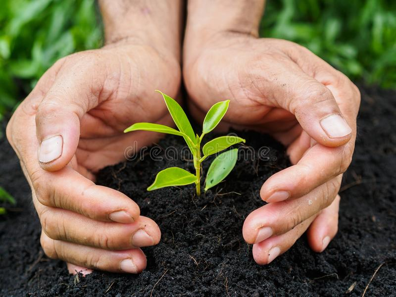 Man hands planting the tree into the soil. planting concept. Environment concept stock photography