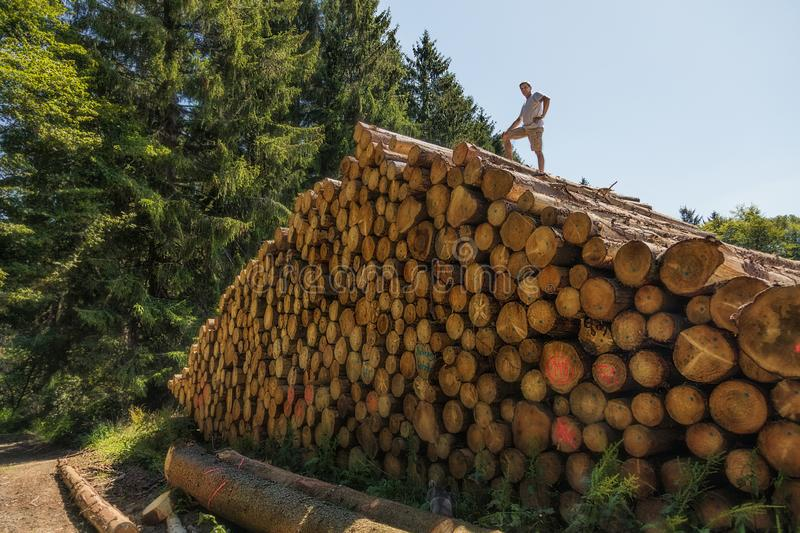A man has climbed a huge pile of wood. On one of the lower tree trunks is written in German: Enter prohibited stock photos