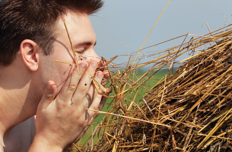 Download Man with hay stock photo. Image of face, close, summer - 25232468