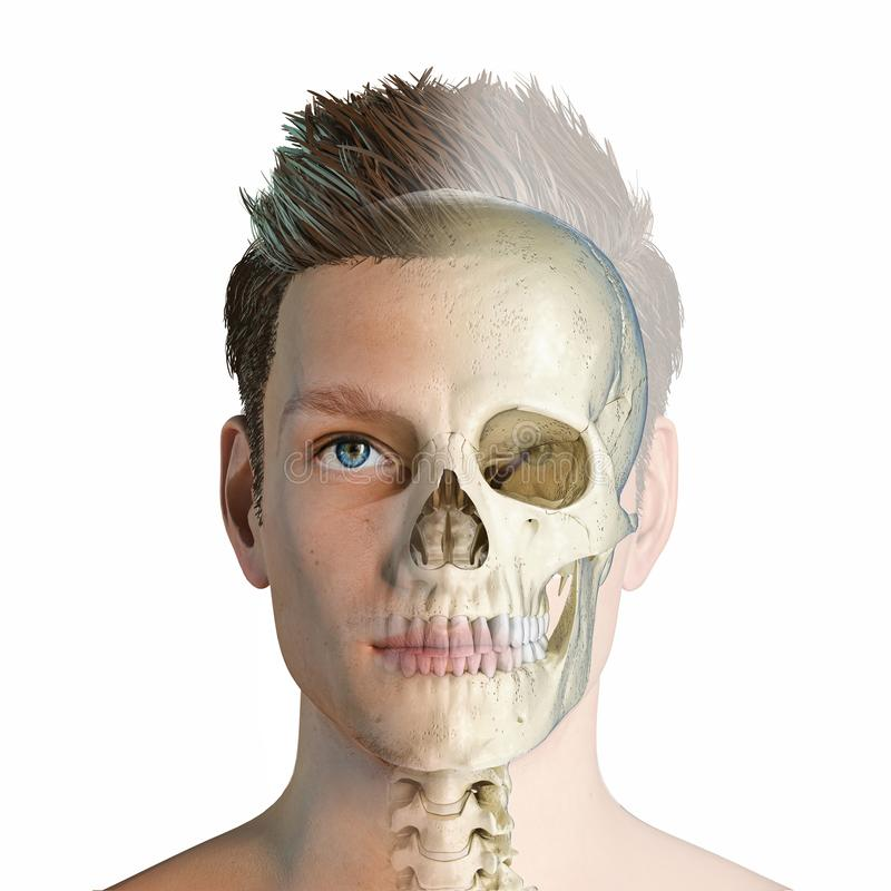 Man head with skull in ghost effect vector illustration