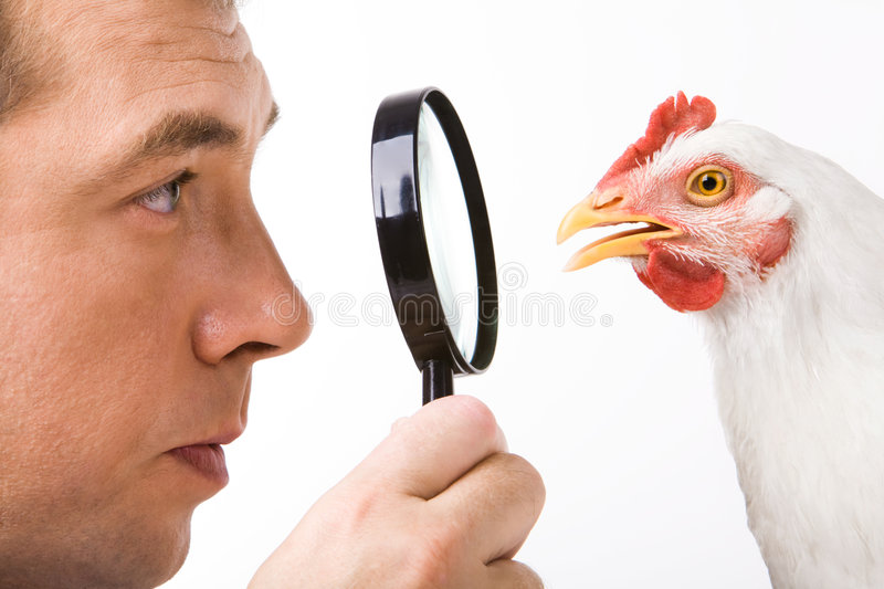 Man and hen. Close-up profiles of man and hen looking at each other through lens in male�s hand