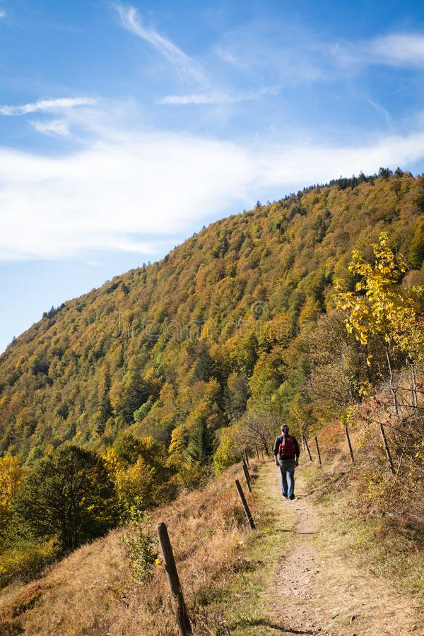 Man is hiking on a beautiful trail in the black forest. Autumn season royalty free stock images