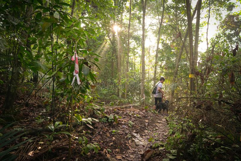 Man hiking with his dog in a tropical jungle royalty free stock images