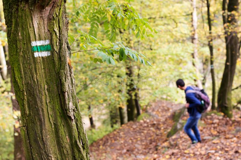 Man on hiking path in a forest, trail sign or marker on a tree. stock photo