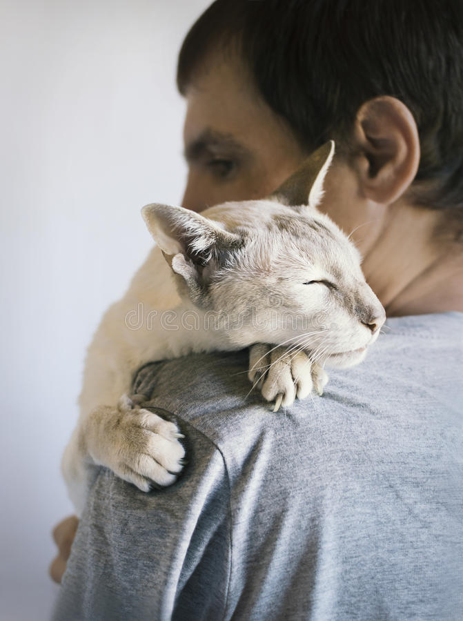 Man and his cat. A man with a white Siamese cat on his shoulder. Selective shallow focus royalty free stock photography