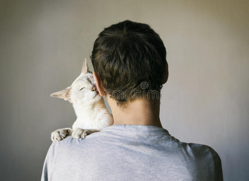 Man and his cat. A man with a white Siamese cat on his shoulder. Selective shallow focus royalty free stock images