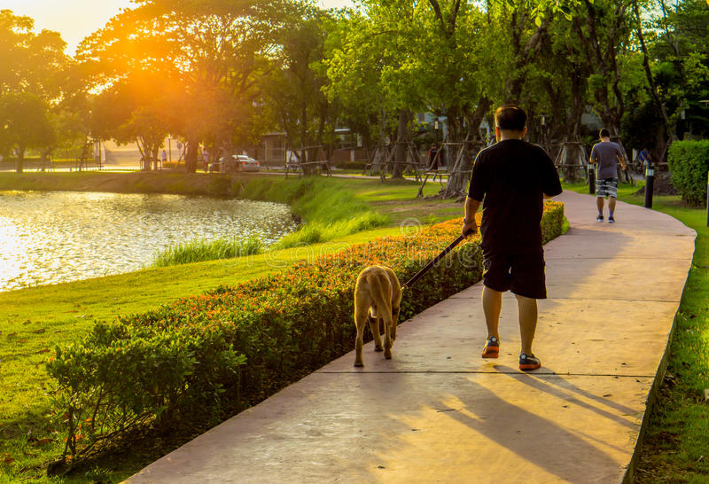A man and his dog in the park stock images