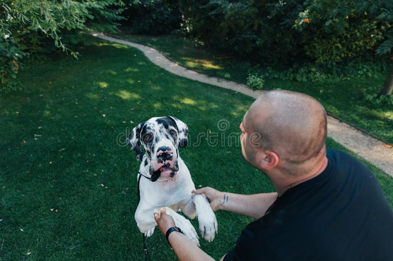 Man with his dog playing outdoor in the park. Young owner hugs his pet stock photo