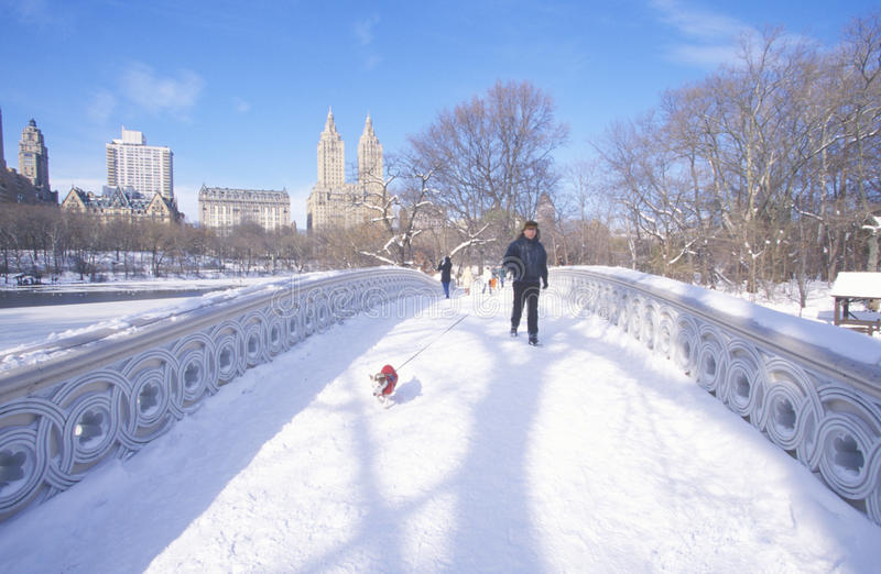 Man and his dog walk with Red Sweater over arch bridge in fresh snow in Central Park, Manhattan, NY stock photos