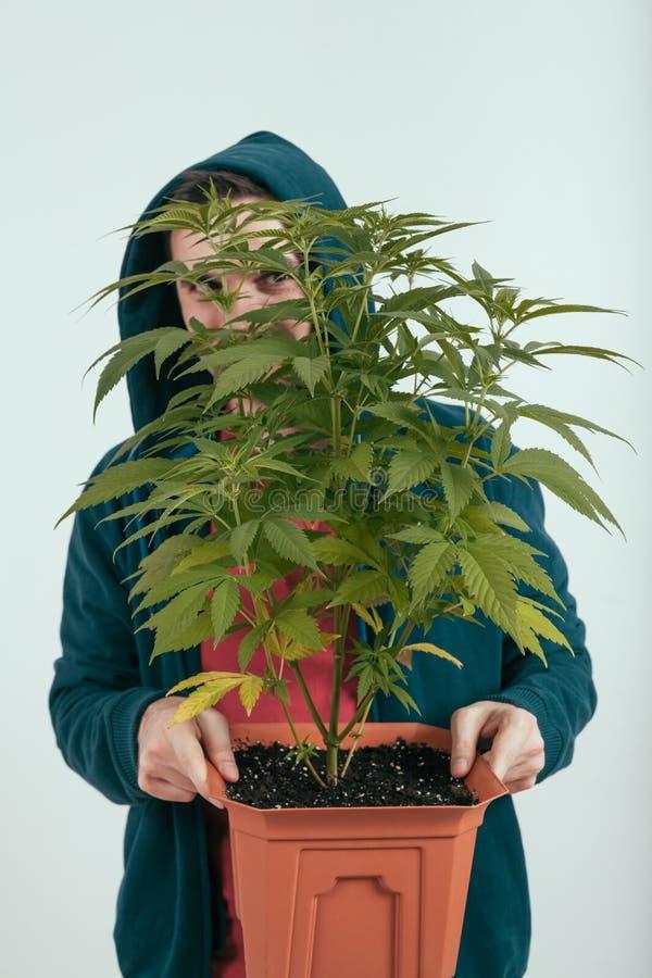 Man holding cannabis plant stock image