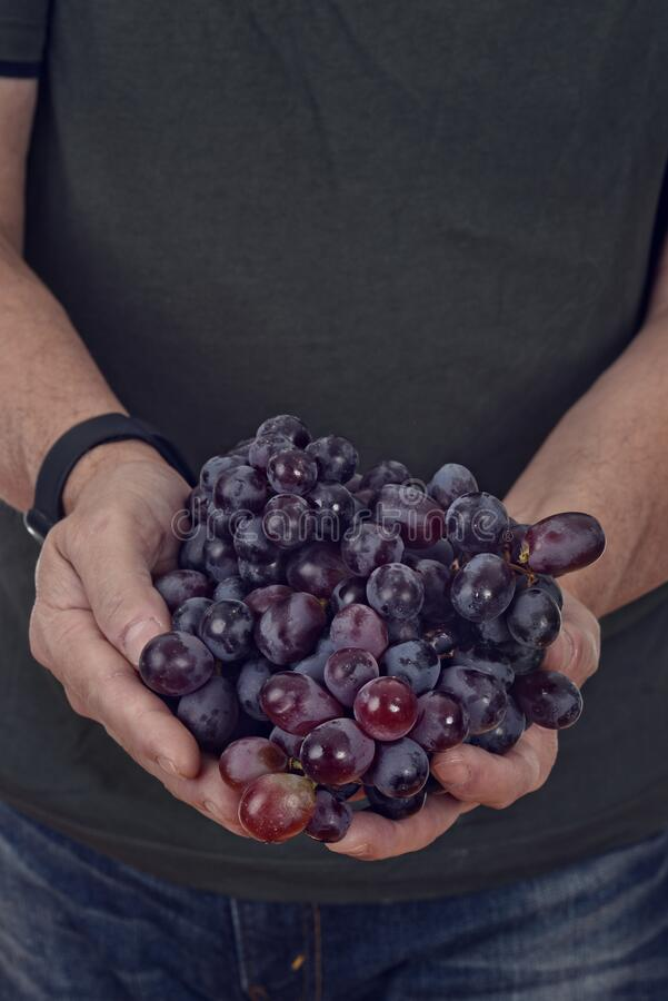 Man holding fresh red seedless grapes stock photo