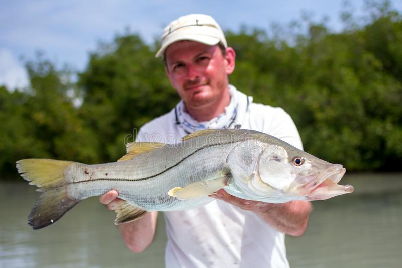 Man holding a good size Snook. A man holding a Snook fish caught with lure, somewhere on the flats of Belize next too a mangrove. This fish is known under the stock photography
