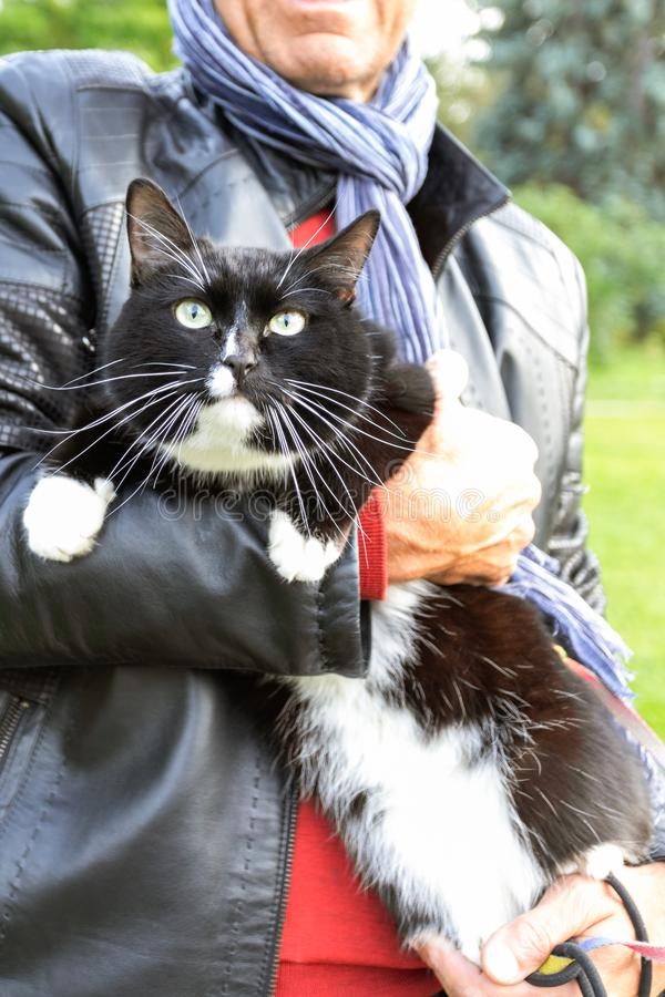 A man holding in hands large cat while walking in park. A man holding in hands large black and white cat while walking in urban park royalty free stock image