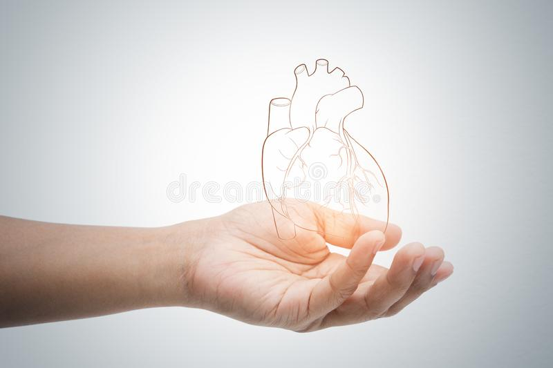 Man holding heart illustration against gray wall background. Concept with heart disease protection and care stock photos