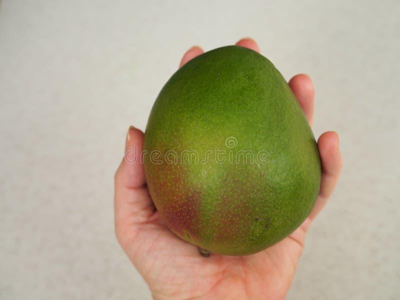 Man holding a large green mango fruit stock photos