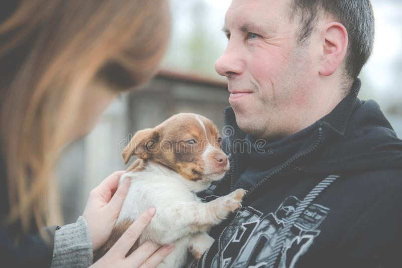 Man holding little puppy dog. Women is touching cute dog stock photo