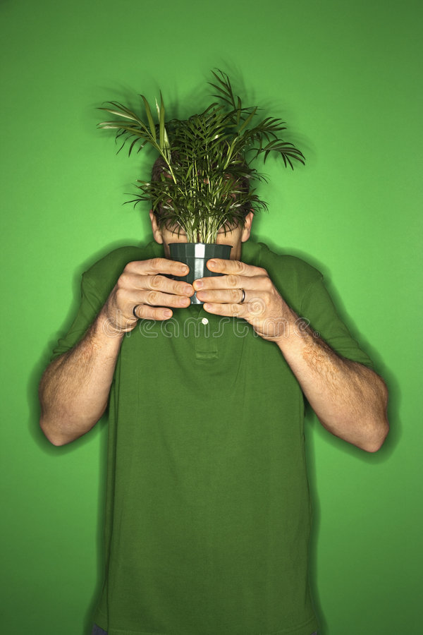 Man holding plant in front of his face. Portrait of adult Caucasian man on green background holding plant in front of his face royalty free stock photos