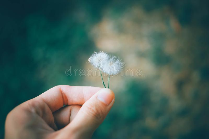 Man holding small blossoms stock images