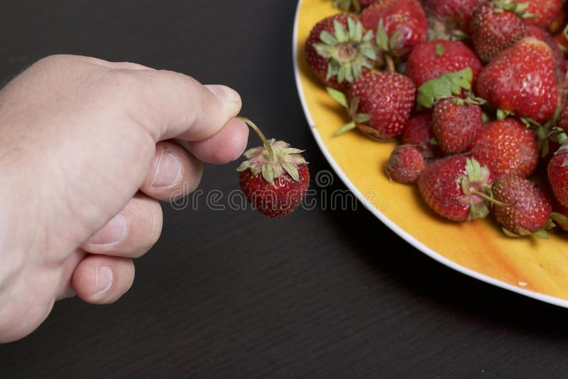 The man is holding strawberry in his hand 她握她的手到草莓板材  下个盘用杏子和苹果 免版税库存照片