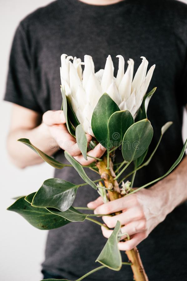 Man Holding White Petaled Flower on Bloom stock photography